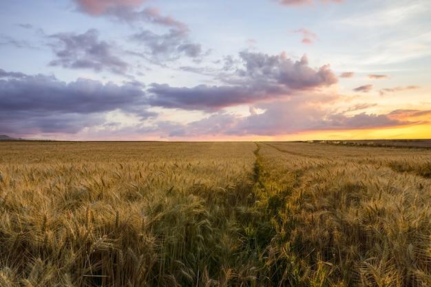 日没時、ランス、フランスの大麦畑の美しい田園風景