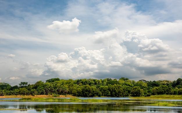 Красивая сельская сцена с лесом и прудом на фоне голубого неба