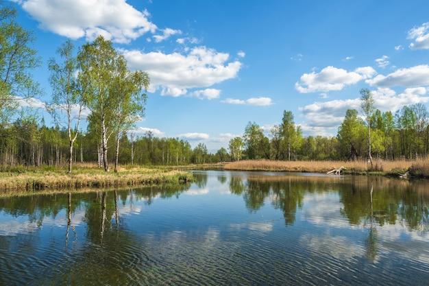 池のそばの白樺と美しいロシアの風景 Premium写真