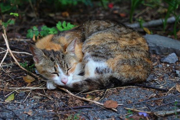 Beautiful and sad homeless cat