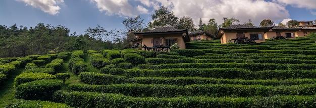 Beautiful scenery during sunrise at chinese village among tea plantation at ban rak thai, mae hong son in thailand