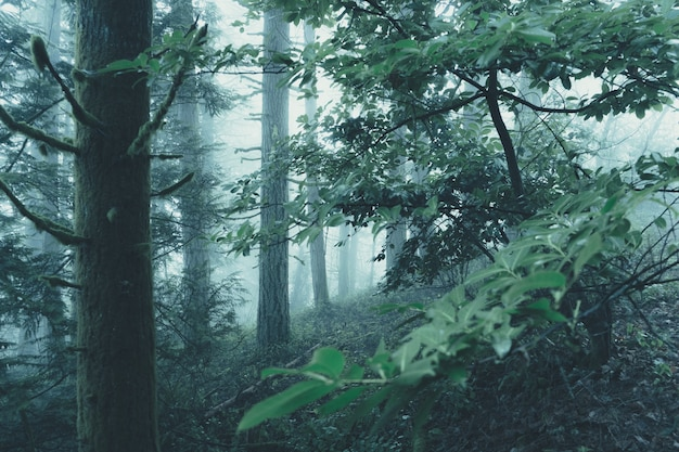 Beautiful scenery of a foggy mysterious forest on a gloomy day
