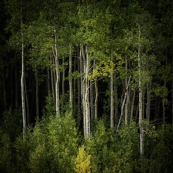 Uno splendido scenario di una foresta piena di alti alberi e altri tipi di piante