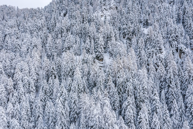 Beautiful scenery of a forest in the snowy alps in winter
