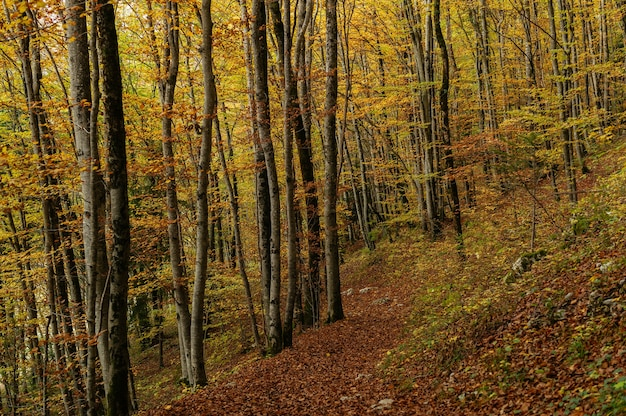 Uno splendido scenario di una foresta con molti alberi autunnali colorati