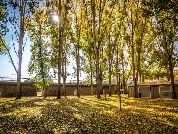 Uno splendido scenario di una foresta con molti alberi ad alto fusto e il sole splendente sullo sfondo