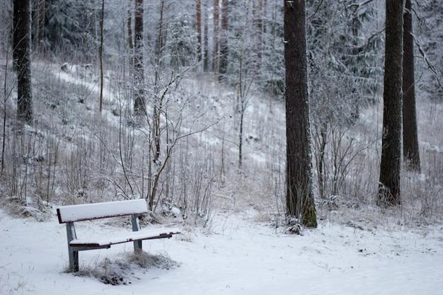 Bellissimo scenario di una foresta con molti alberi coperti di neve