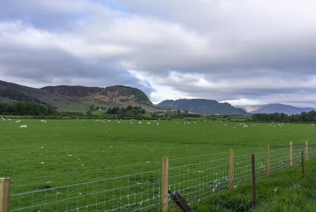 スコットランドの農地に散らばる羊を眺めるアビモアからキンロック・ラガンまでの美しい風景