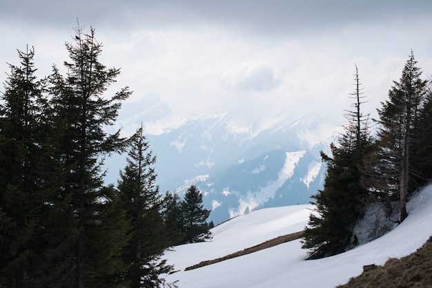Beautiful scenery of high mountains covered with snow and green fir trees under a cloudy sky