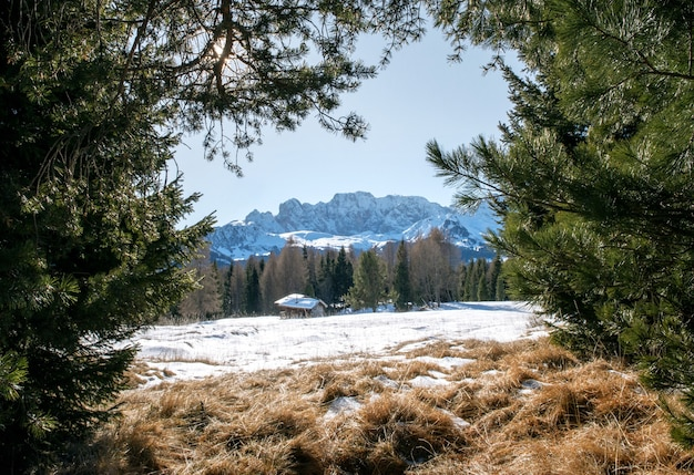 Beautiful scenery of high rocky cliffs and trees covered with snow in the dolomites