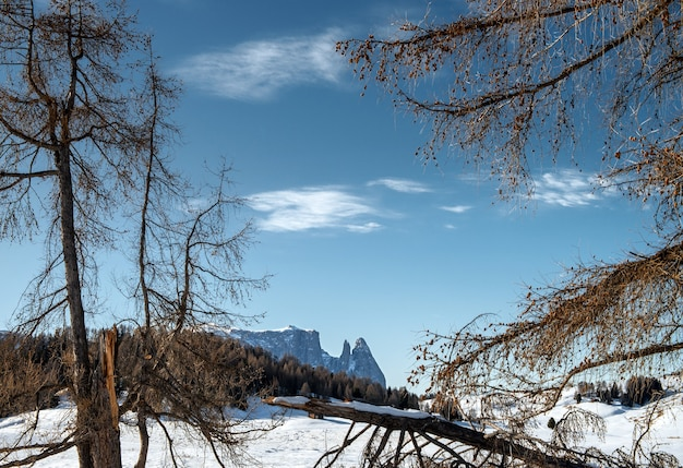 Bellissimo scenario di alte scogliere rocciose e alberi coperti di neve nelle dolomiti