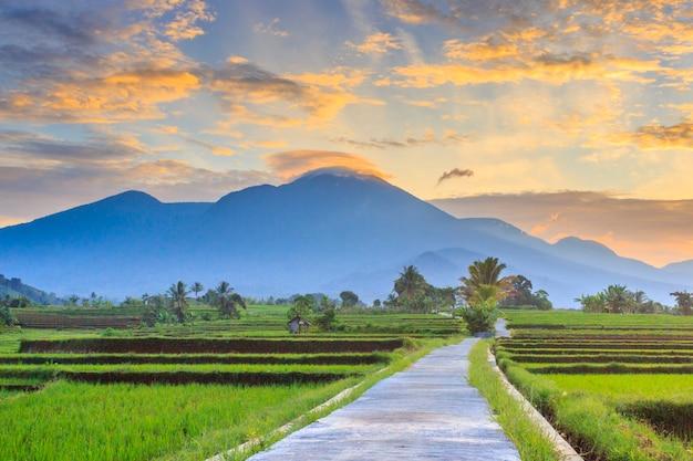 朝の美しい風景、インドネシアの美しい田んぼのある村の自然
