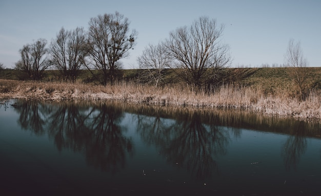 Beautiful scenery of a lake with the reflection of leafless trees