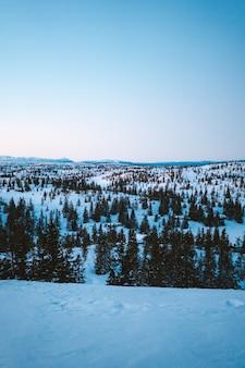 ノルウェーの雪に覆われたモミの木がたくさんある森の美しい風景