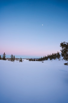 노르웨이의 눈으로 덮여 전나무가 많은 숲의 아름다운 풍경