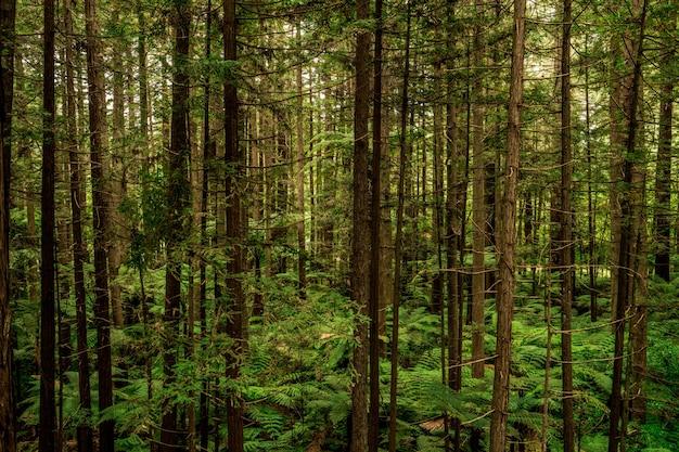 다른 유형의 고층 나무로 가득한 녹색 숲의 아름다운 풍경