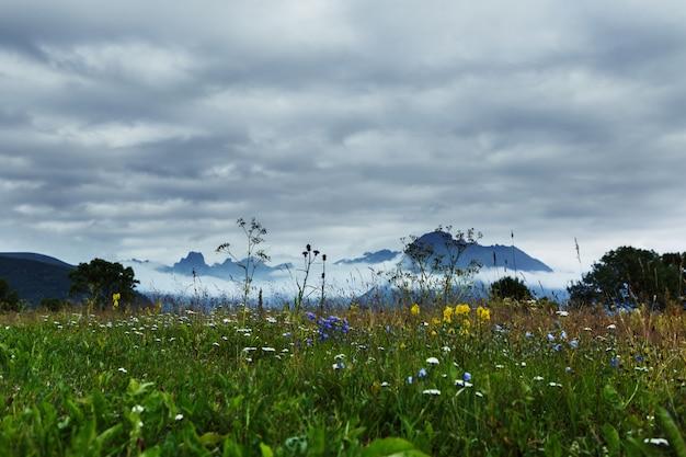 Красивые пейзажи зеленого поля с полевыми цветами в окружении красивых гор
