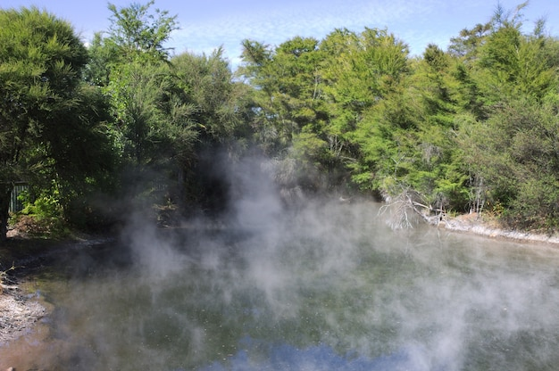 ニュージーランドの緑の木々に囲まれた温水プールの美しい風景