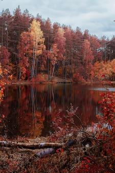 Красивые пейзажи озера в окружении деревьев с осенними красками