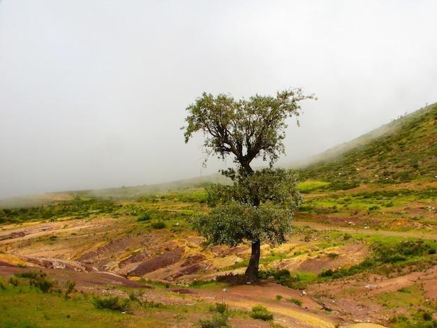 灰色の曇り空の下の空のフィールドの真ん中に孤独な木の美しい風景