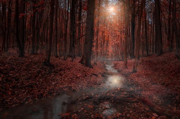 Красивый пейзаж узкой реки, текущей посреди леса с опавшими листьями на земле.