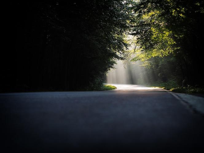 木々の範囲を通って落ちる明るい太陽光線のあるパスの美しい風景