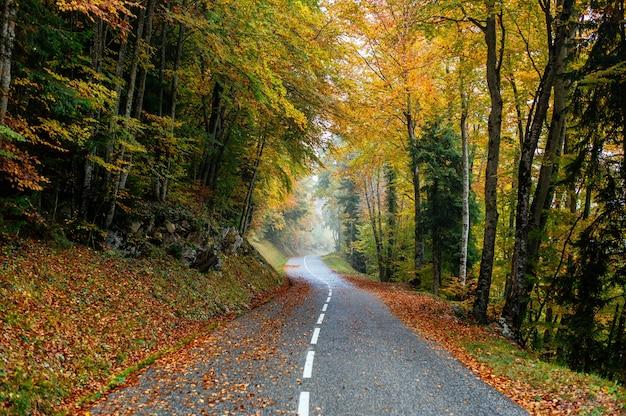 화려한 가을 나무가 많은 숲에서 도로의 아름다운 풍경