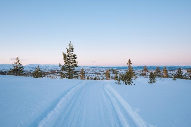Красивые пейзажи заснеженной местности с множеством зеленых деревьев в норвегии.