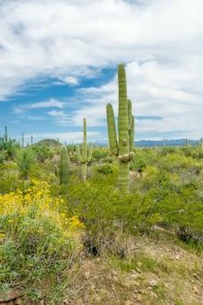 アリゾナ州ツーソン郊外のソノラ砂漠のさまざまなサボテンと野生の花の美しい風景