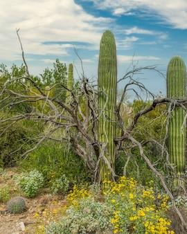 アリゾナ州ツーソン郊外のソノラ砂漠にあるさまざまなサボテンと野生の花の美しい風景