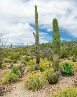 アリゾナ州ツーソン郊外のソノラ砂漠のさまざまなサボテンと野花の美しい風景