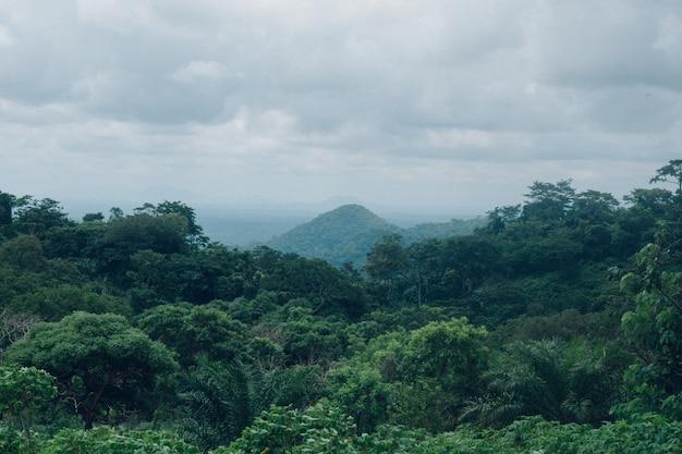 흐린 하늘 아래 푸른 숲의 아름다운 풍경