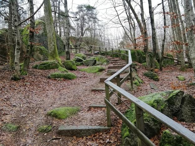 ノルウェー、ラルヴィークの森の真ん中に緑の木々の美しい風景
