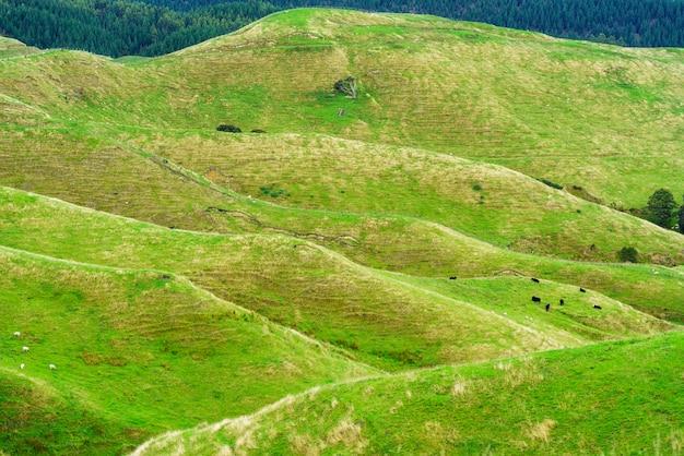 ニュージーランドの北島、ファンガヌイ、秋の国立公園のファンガヌイ川沿いの山々の美しい風景