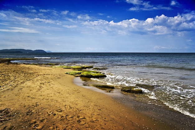 苔で覆われた岩がたくさんある海岸の美しい風景