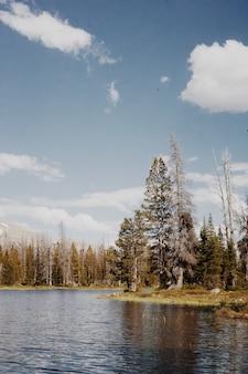 흐린 푸른 하늘 아래 언덕과 나무와 시골 자연의 아름다운 풍경