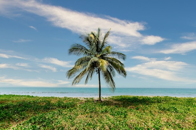 Beautiful scenery of a palm tree in the middle of greenery with the calm sea on the background