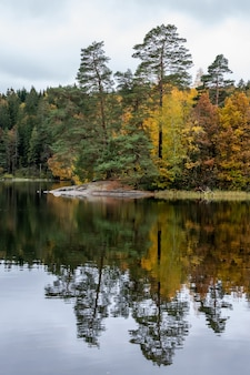 Beautiful scenery of a range of autumn trees reflecting in the lake at daytime