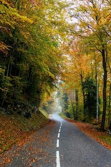 Bellissimo scenario di una strada in una foresta con molti alberi autunnali colorati