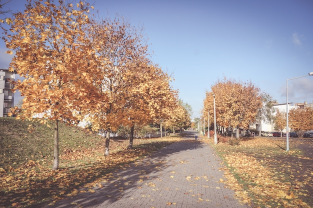 Beautiful scenery of a sidewalk surrounded by autumn trees with dried leaves