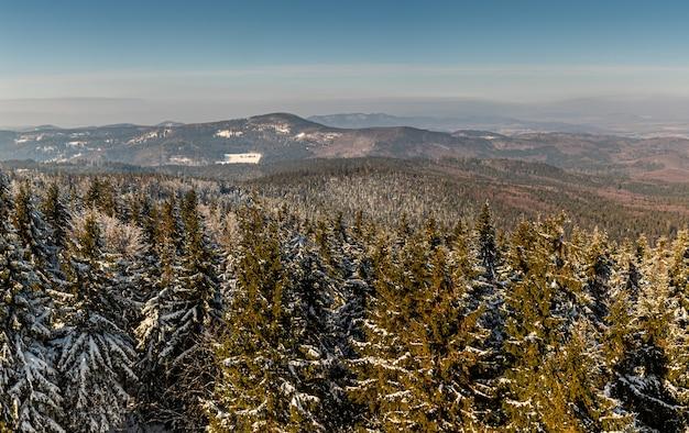 Uno splendido scenario di abeti coperti di neve sulle colline in inverno