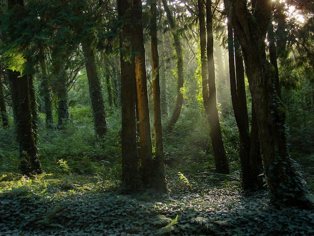 Beautiful scenery of the sun shining over a green forest full of different kinds of plants