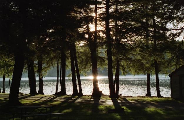 Splendido scenario di alberi con un lago