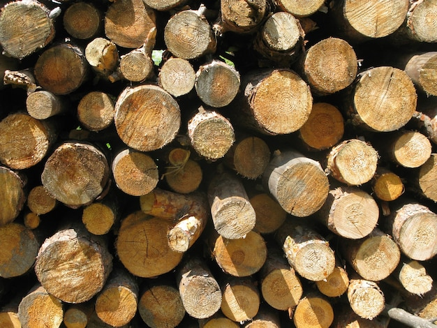 Beautiful scenery of wood logs bunch under the sunlight