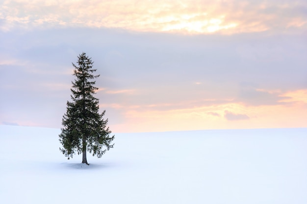 Beautiful scenic view of christmas tree on a gentle snow and twilight sky sunset background in winter.