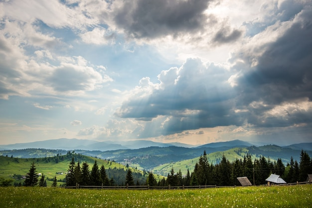 Beautiful scenic view of green meadows on the background of coniferous tall trees growing in the mountains apple sunny hot summer day