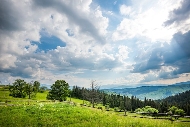 Beautiful scenic view of green meadows on the surface of coniferous tall trees growing in the mountains apple sunny hot summer day
