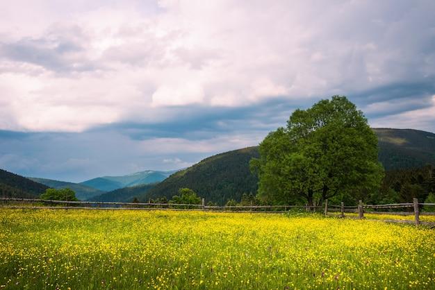 山に生えている針葉樹の背の高い木々を背景に緑の牧草地の美しい景色リンゴ晴れた暑い夏の日