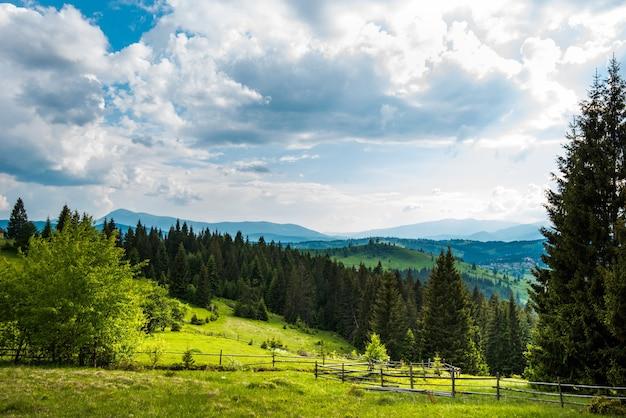 산 사과 화창한 더운 여름 날에 성장하는 침엽수 키 큰 나무의 배경에 녹색 초원의 아름다운 경치를 볼