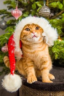 サンタの帽子をかぶった美しいスコティッシュフォールドの赤い猫がクリスマスツリーの近くに座っています